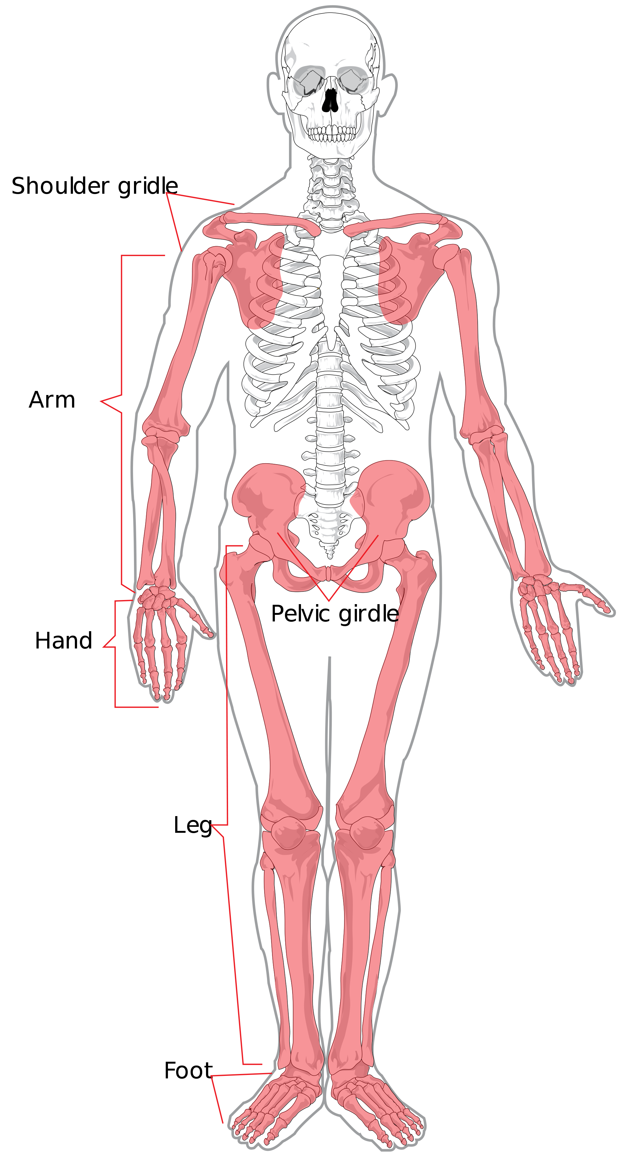 Understanding The Psoas Muscle Of The Soul